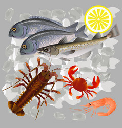 Seafood on ice vector
