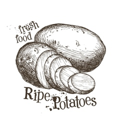 ripe potatoes logo design template fresh vector image vector image