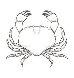 crab drawing on white background hand drawn vector image vector image