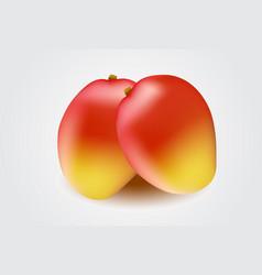 mango fruit isolated on white background vector image vector image