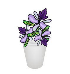 Beautiful Vanda Orchid in A Flower Pot vector image
