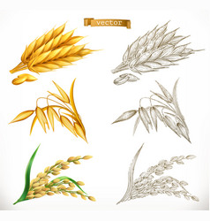 ears wheat oats rice 3d realism and engraving vector image