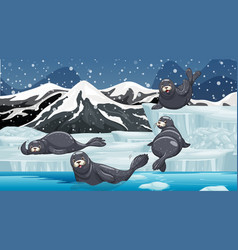 Scene with seals on snow mountain vector