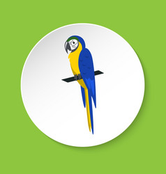 blue and yellow macaw parrot icon in flat style vector image