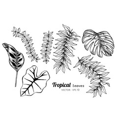 Collection set of tropical leaves drawing vector