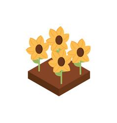 farm planting sunflower rural isometric icon vector image