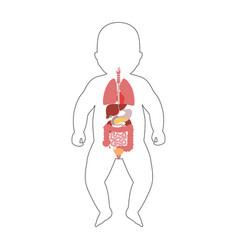 Internal organs baby vector