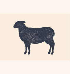 lamb sheep vintage logo retro print poster for vector image