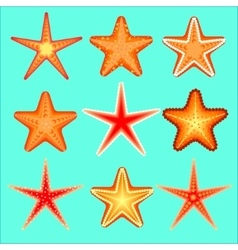 Starfish a set nine options vector