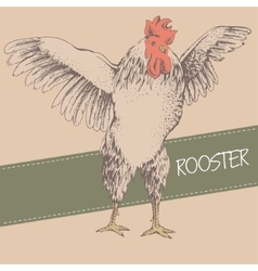 Front rooster sketch vector