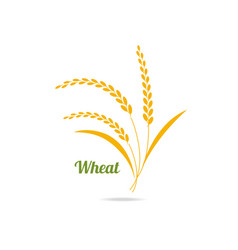 icon of wheat vector image