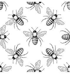 bee seamless pattern hand drawn insect vector image