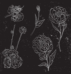 collection silver hand drawn peony and vector image