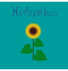 Flat on background sunflower vector
