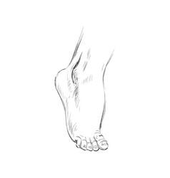Hand drawn sketch feet vector