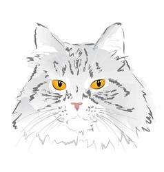 Muzzle gray cat vector image