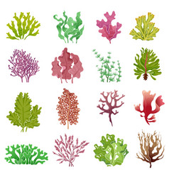 Seaweed set sea plants ocean algae and aquarium vector