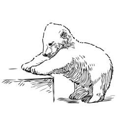 Sketch playing polar bear cub vector