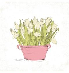 Spring tulip flowers vector