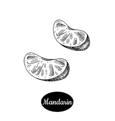 hand drawn sketch style fresh mandarin vector image