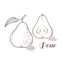 Engraving pear in vector image