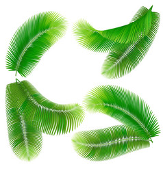 tropical palm leaf vector image