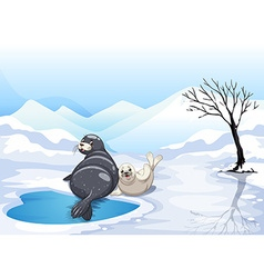 Two seals sitting on ice vector