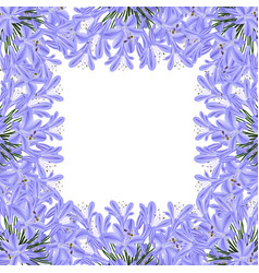 blue purple agapanthus border - lily of the nile vector image