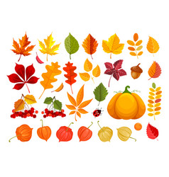 Fall leaves and autumn objects set vector