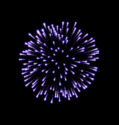 Firework purple bursting isolated black background vector
