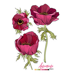 Floral bouquet design garden red burgundy vector