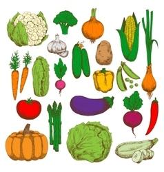 Healthy and juicy fresh vegetables sketch symbol vector image