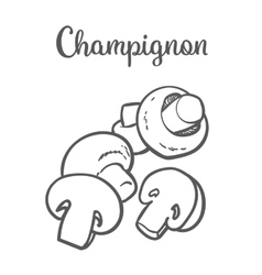 Set of champignon edible mushrooms vector