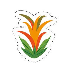 cartoon guzmania flower image vector image