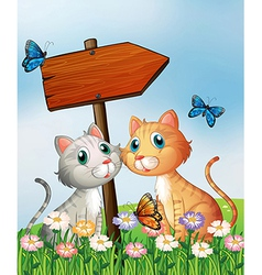 Two cats in front of an empty wooden arrow board vector image vector image