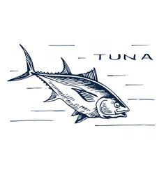 atlantic bluefin tuna for sushi vector image vector image