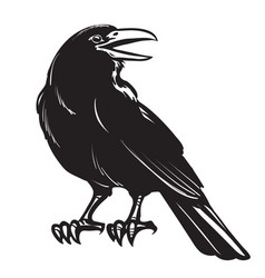 Graphic black crow isolated on white background vector