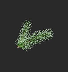green pine branch fir tree branch vector image