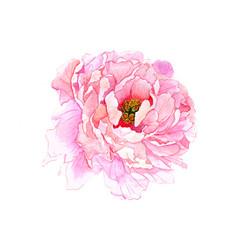Watercolor flower 6 vector
