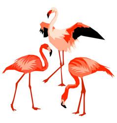 set of flamingo tropical bright abstract birds vector image vector image