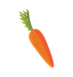 flat carrot icon vector image