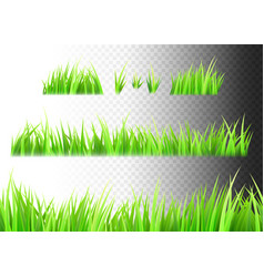 Grass isolated on white black and vector