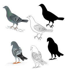 Pigeons carriers domestic breeds sports birds vector