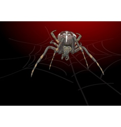 Portrait scary spider vector image
