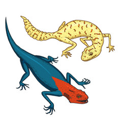 ibiza wall lizard common leopard or spotted fat vector image vector image