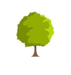 Beech tree icon flat style vector