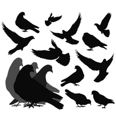 doves vector image