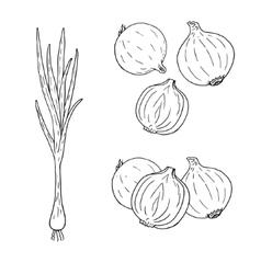 Hand drawn set of onion contour vector image