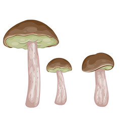 set three boletus mushrooms cartoon isolated vector image