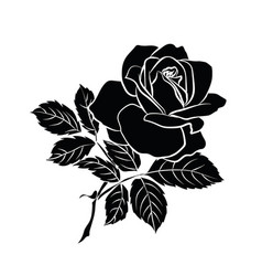 silhouette of rose vector image